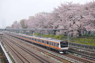 桜の東中野を行くE233系
