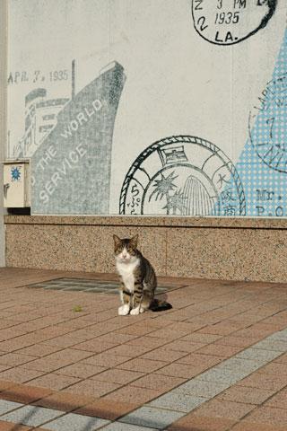 広島駅前のねこさん