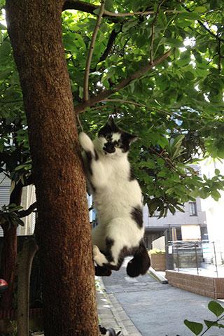 木登りねこさん
