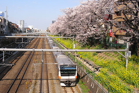 桜とE233系