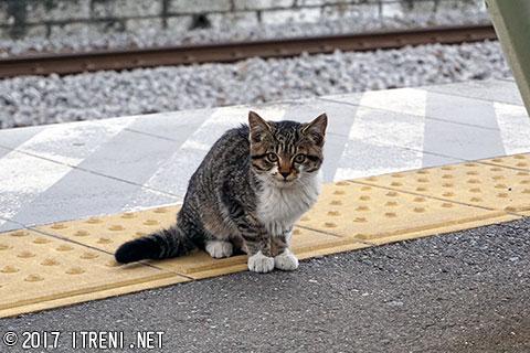 井野駅に現れた子ねこ